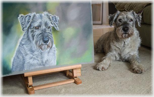Tierzeichnung, Pastell, Schnauzer, pet portrait
