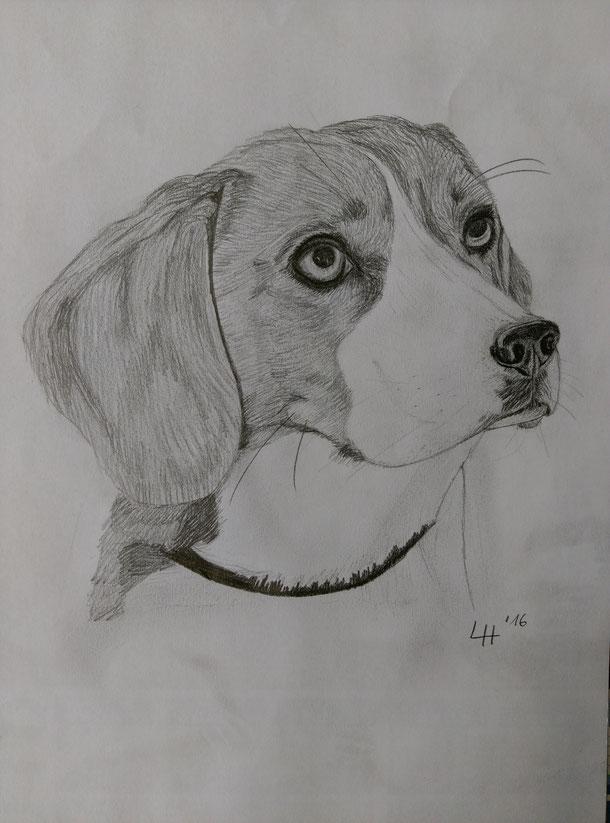 Beagle #Schnellzeichung