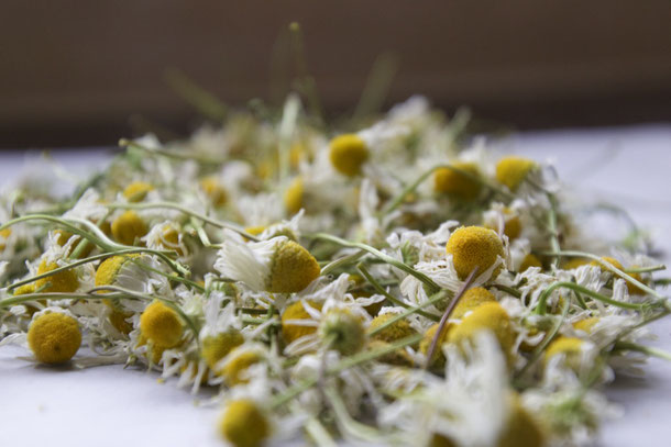 Chamomile from the garden.