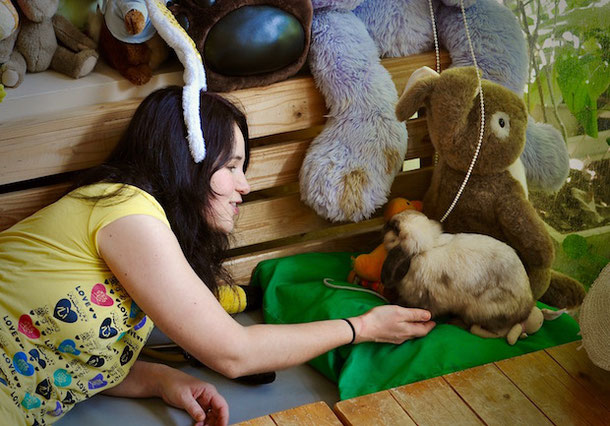 Playing with a rabbit in rabbit cafe in bangkok