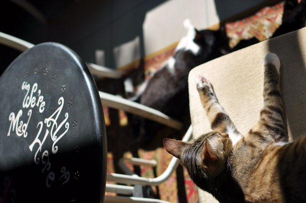 Cat cafe Warsaw, Miau cafe Warszawa, sleeping cats