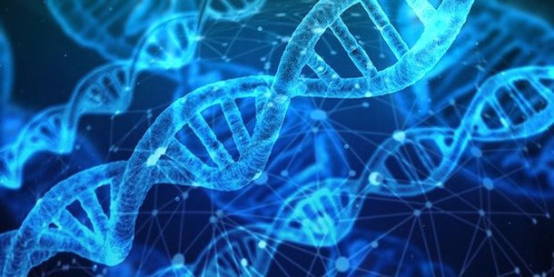 DNA journey is on the rise