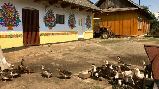 Утки в деревне Залипье.
