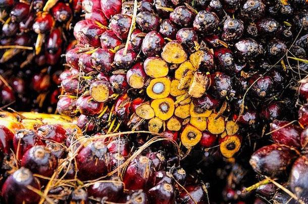 Вред пальмового масла - туризм, экология, будущее, осознанное потребление