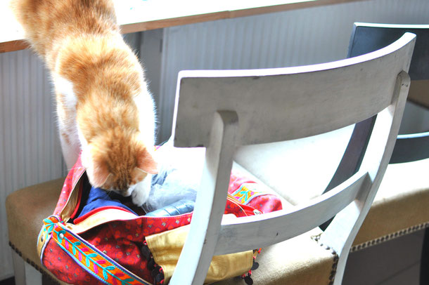 Cat Cafe Warsaw, Miau Cafe Warszawa, cat inspecting the bag