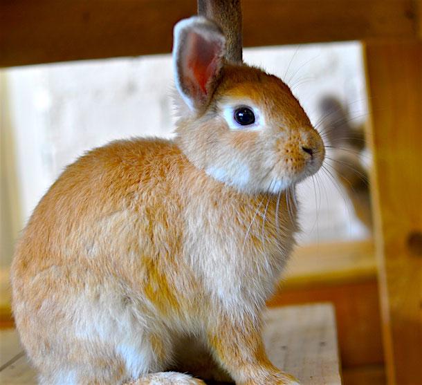 Cute rabbit in the rabbit cafe in Bangkok