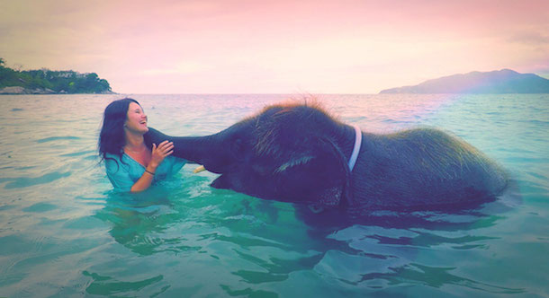 Swimming and bathing with elephant in Phuket