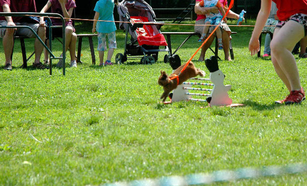 Unusual thing to do in Stockholm is to attend a rabbit-jumping competition