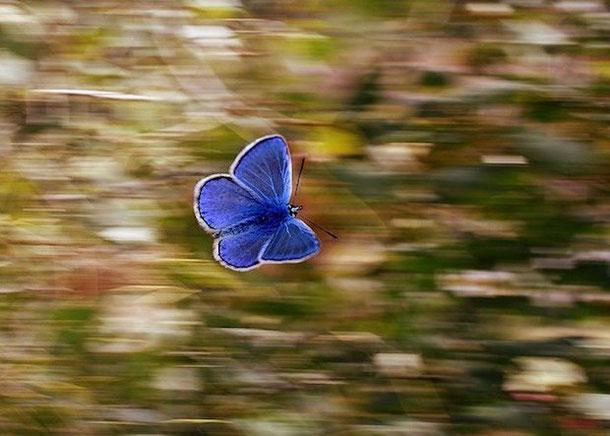 Эффект бабочки в туризме - осознанное потребление