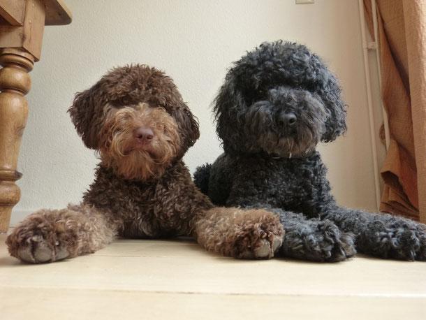 Balou       &         Conga