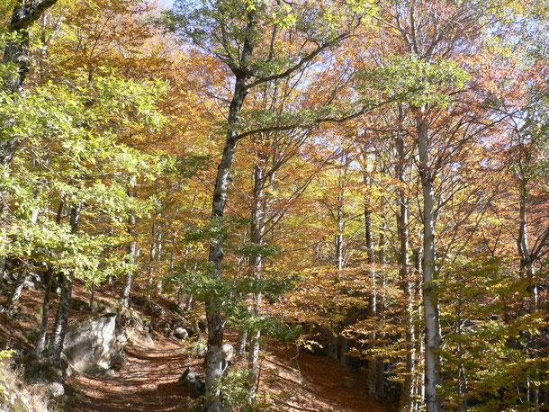 Lumière d'automne (Lozère), photo MHB