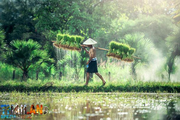Bangkok nach Kambodscha buchen