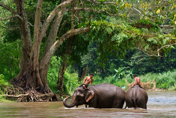 Elefanten mit ihren Mahouts