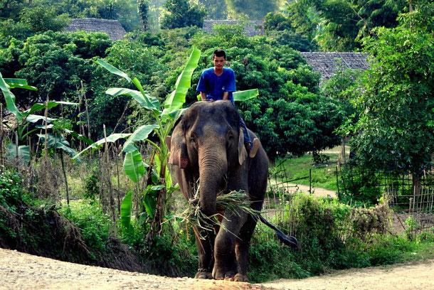 Mahout und sein Elefant in Chiang Mai
