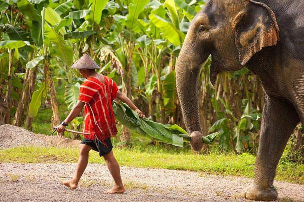 Beziehung zwischen Mahouts und Elefanten.
