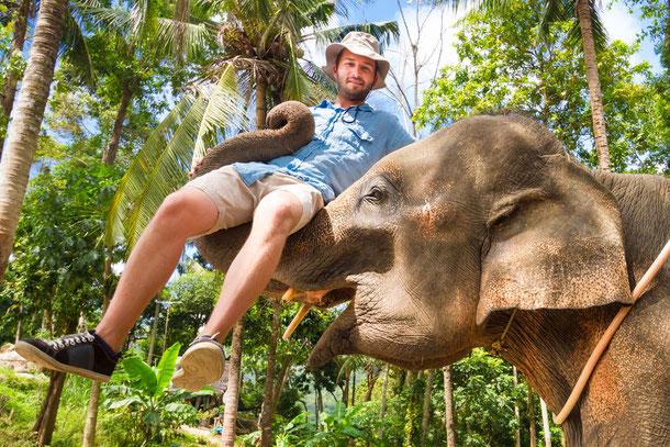 Elefant trampelt Touristen tot