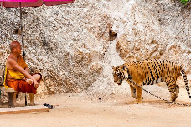 Tiger-Tempel in Kanchanaburi