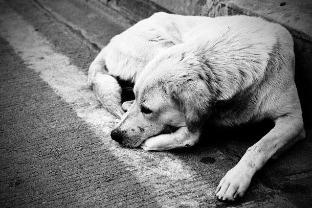Tierschutz in Thailand