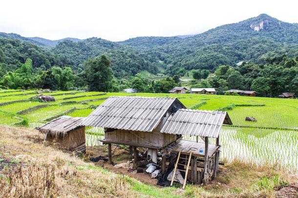 Kleines Dorf mit Reisfeldern in Doi Luang