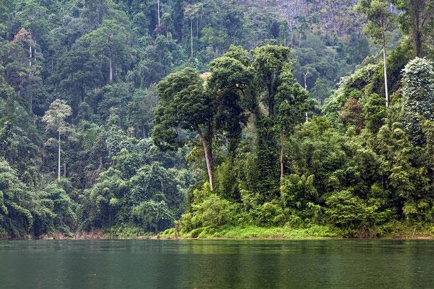 Empfehlung Abenteuerurlaub: Der Khao Sok Nationalpark bietet außerordentliche Trekking-Touren.