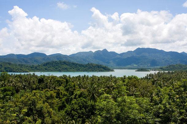 Dicht bewachsener Dschungel im Inselinneren