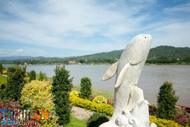 Mekong Riesen Wels in Chiang Khong