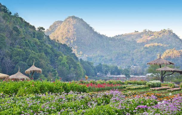 Der sattgrüne Norden Thailands