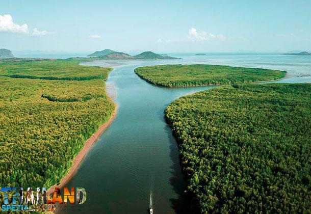 Mangroven auf der Insel Koh Lanta