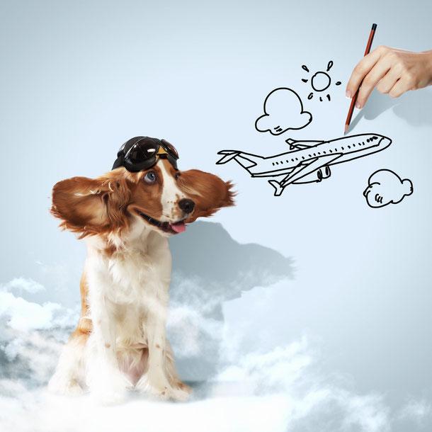 Thailand Urlaub mit Hund