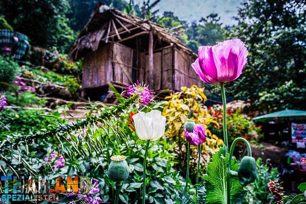 Drogenentzug von Heroin, Yaba, Opium und andere Suchtmitteln im Wat Tham Krabok