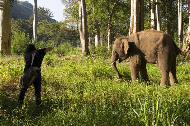 Tierfotografie in Thailand