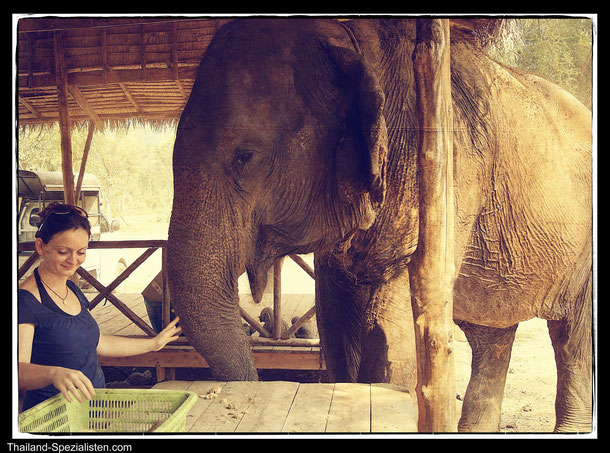 Elephants World in Kanchanaburi