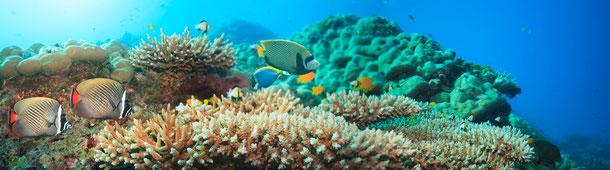 Unterwasser: Hat Noppharat Thara-Mu Ko Phi Phi