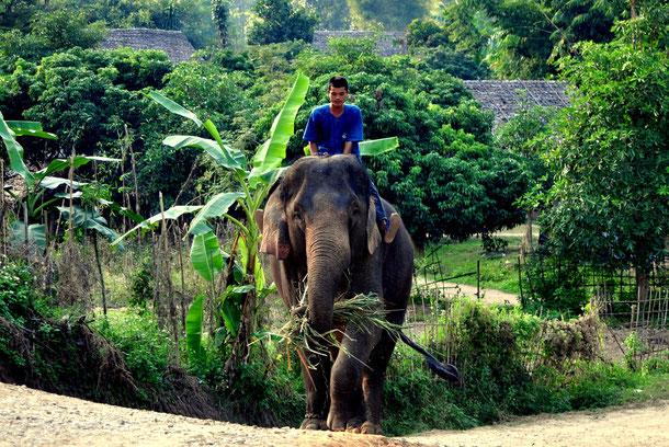 Thailands Elefanten