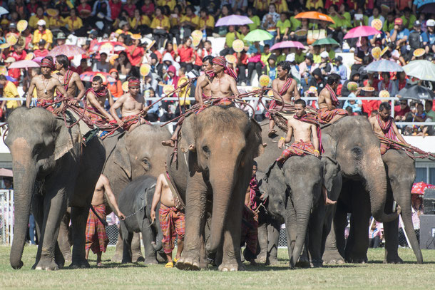 Elefantenfestival Surin