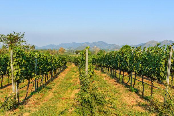 Chiang Rai Winery