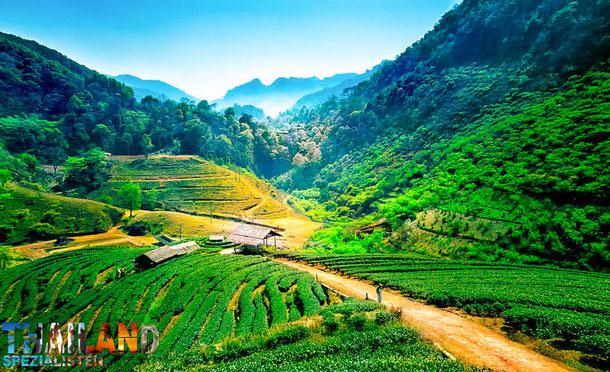 Angkhang Berge, Chiang Mai