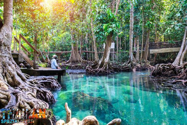 Emerald Pool - Sehenswürdigkeit in Krabi