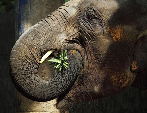 Elefanten Camp in Chiang Mai