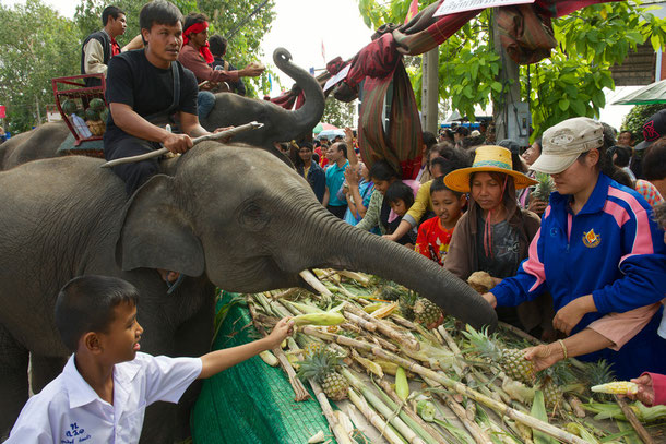 Elephant Buffet in Surin
