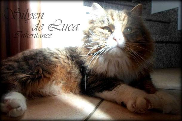 Silyen de Luca