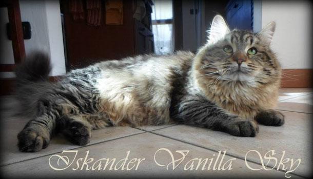 Iskander Vanilla Sky