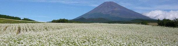 画像クリックで裾野市から観える富士山特設サイトにジャンプいたします。(ご提供;裾野市観光協会)