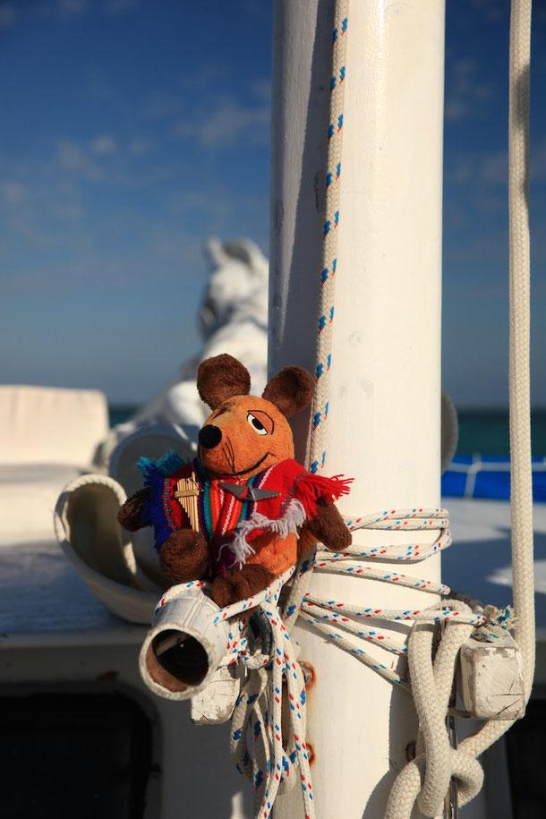 Co-Skipper Maus beim Inspizieren der SIRENA AZUL
