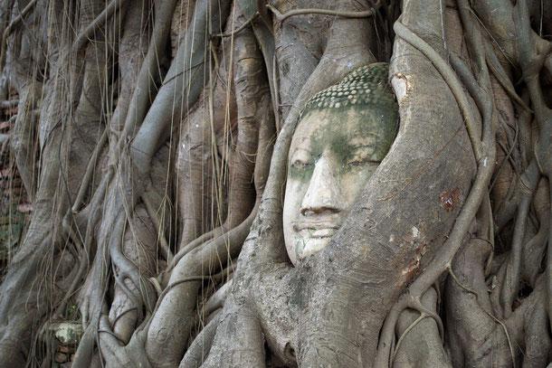 Ayutthaya Thailand Wat Phra Mahathat Tempel