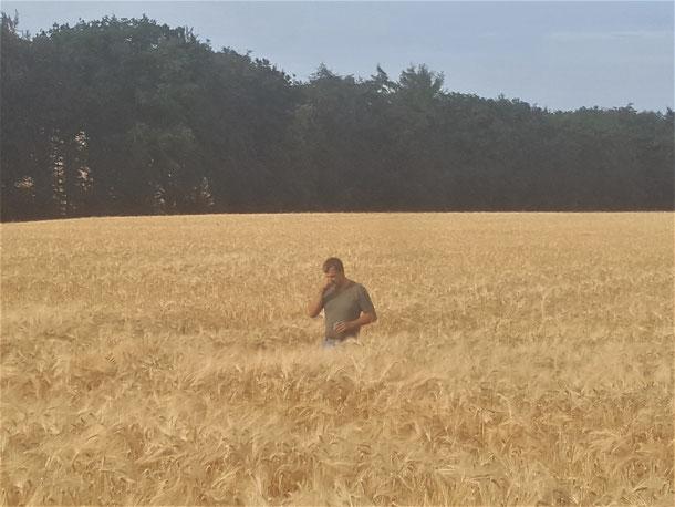 Erntezeit? Dirk Fülling überprüft die Kornreife für erstklassiges Futter