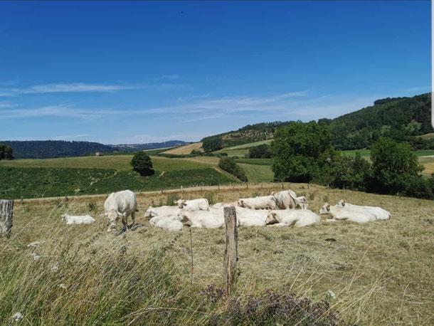 Nicht die Toskana, sondern Nordhessen: Blick von Zwergen in Richtung Ostheim