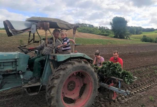 Gemeinschaftlich Erdbeeren pflanzen: Bruno mit Enkel, Isabelle & Dirk Fülling