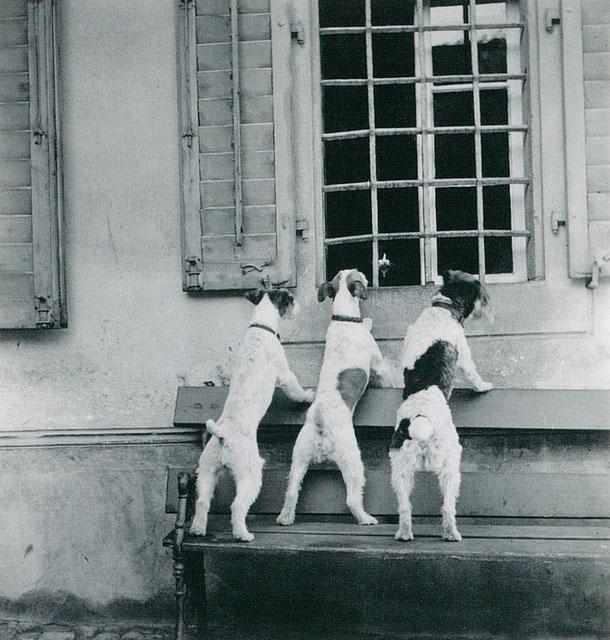 Hans Potthof, Die Belagerung  (Zug),  ca. 1939, Fotografie