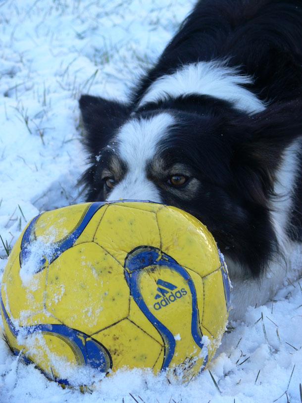 Pip is gek op de sneeuw....kan er niet genoeg van krijgen!